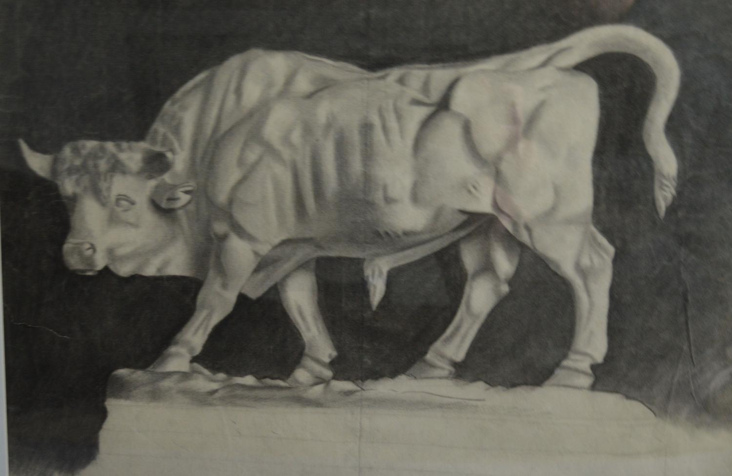 C1900 Charcoal Drawing Of A Bull