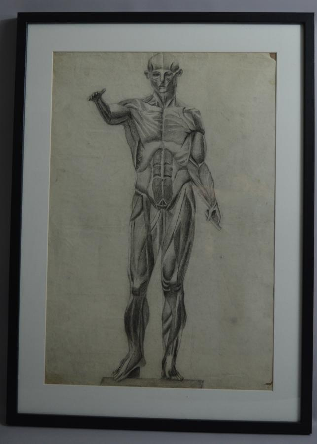 Anatomical Charcoal Drawing Of A Man