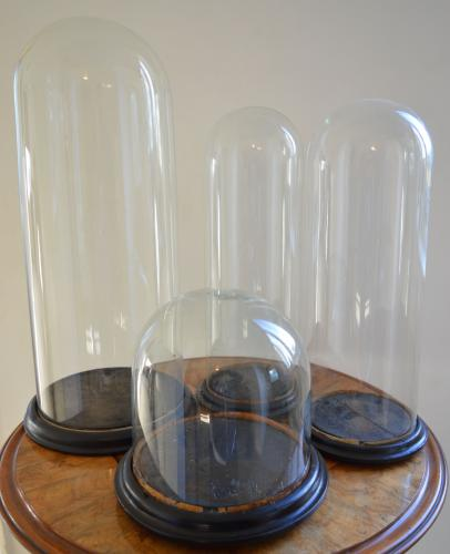 Victorian Glass Domes
