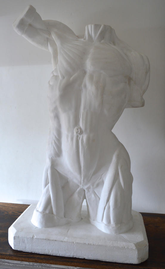 Large Plaster Anatomical Male Study