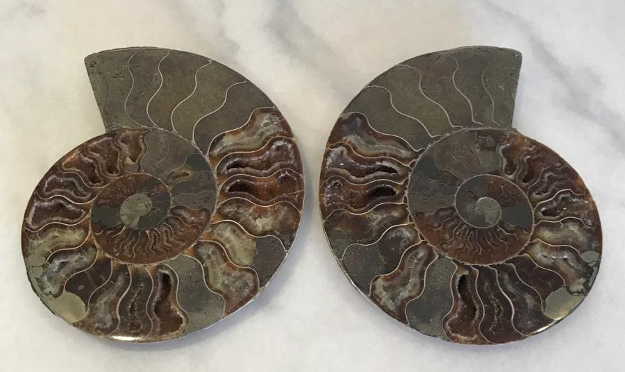 CUT & POLISHED AMMONITE PAIR